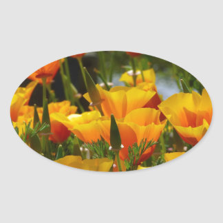 Orange California Poppies_3.1 Oval Sticker