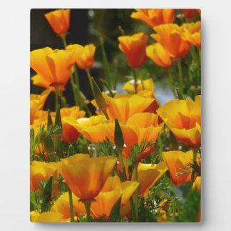 Orange California Poppies_3.1 Plaque