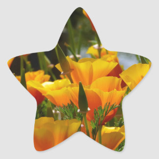 Orange California Poppies_3.1 Star Sticker