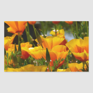 Orange California Poppies_3.1 Sticker