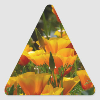 Orange California Poppies_3.1 Triangle Sticker