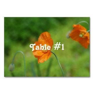 Orange California Poppy Table Cards