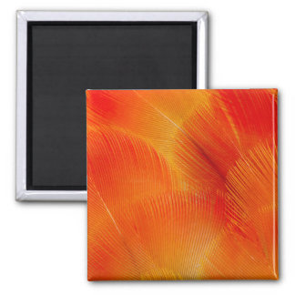 Orange Camelot Macaw Feather Abstract Magnet