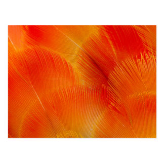 Orange Camelot Macaw Feather Abstract Postcard