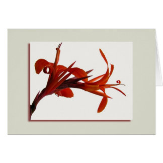 Orange Canna Greeting Card