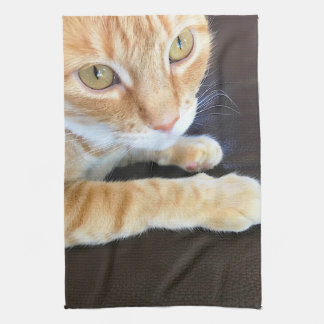 Orange cat closeup kitchen towel