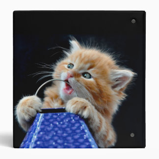 Orange Cat Cub Playing and Biting Blue 3 Ring Binder