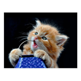 Orange Cat Cub Playing and Biting Blue Postcard