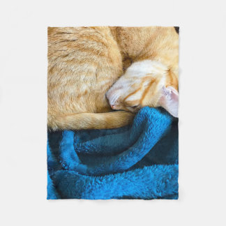 Orange cat curled up on blanket
