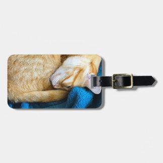 Orange cat curled up on blanket luggage tag