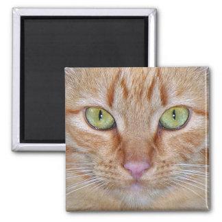 Orange Cat Magnet