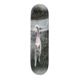 Orange cat skate board decks