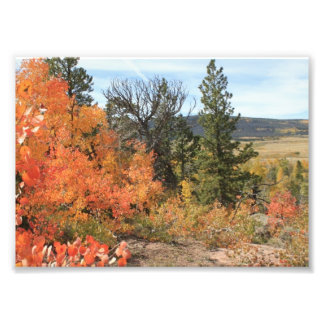 Orange Colorado Aspen Photo Print