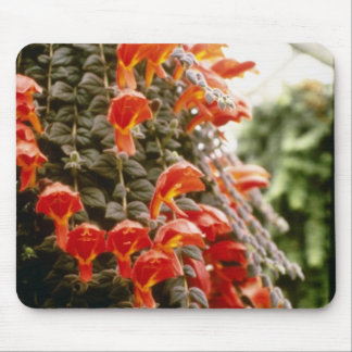 Orange Columnea Gloriosa Goldfish Plant flowers Mouse Pad