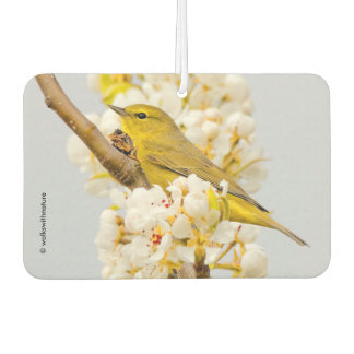 Orange-Crowned Warbler Amid the Cherry Blossoms Car Air Freshener