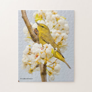 Orange-Crowned Warbler Amid the Cherry Blossoms Puzzle