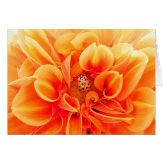 Orange Dahlia and Ladybug Card