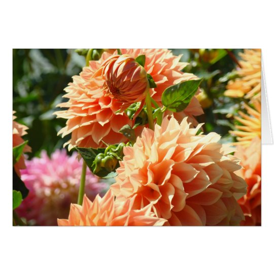 Orange Dahlia Flowers greeting cards Green Garden