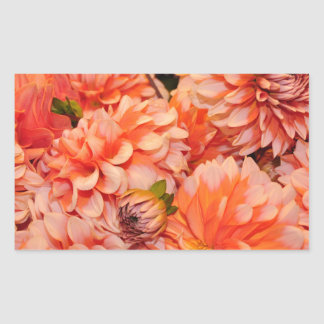 Orange dahlia flowers sticker