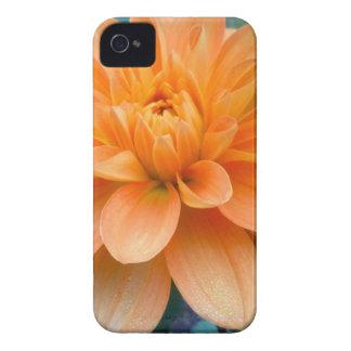 Orange Dahlia iPhone 4 Case
