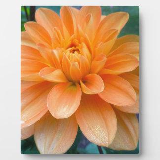 Orange Dahlia Plaque