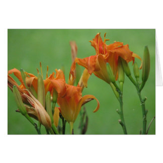 Orange Day Lilies Card