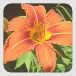 Orange Day Lilies Stickers