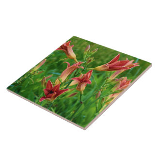 Orange Daylilies Summer 2016 Tile