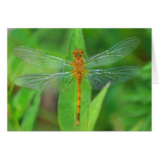 Orange Dragonfly Card