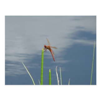 orange dragonfly on the blade of grass postcard