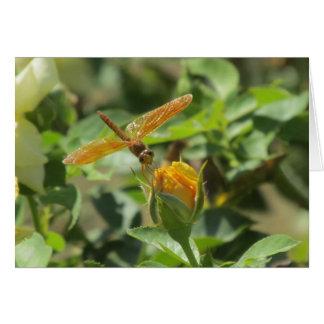 Orange Dragonfly on Yellow Rosebud Note Card