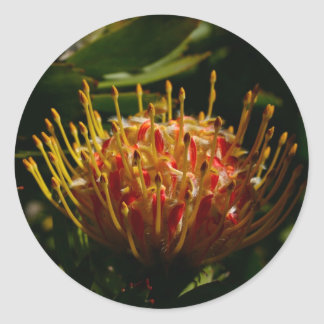 ORANGE EXOTIC CACTUS FLOWER CLASSIC ROUND STICKER