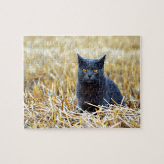 Orange-Eyed Black Cat in Field Jigsaw Puzzle