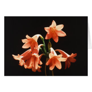 Orange Fire Lily and Facts Card