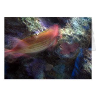 Orange Fish Birthday Card w Bible Verse2