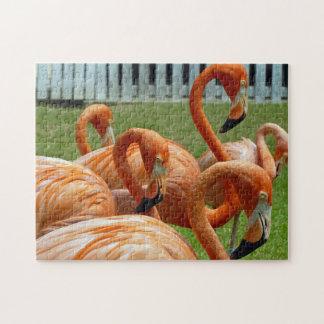 Orange flamingos photo puzzle