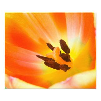 Orange Flora Photo Print