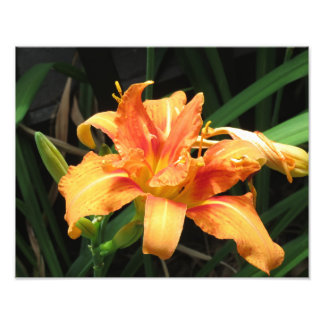 Orange Flower Bloom Floral Photography Photo Print