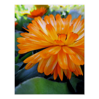 Orange Flower Blossom Poster