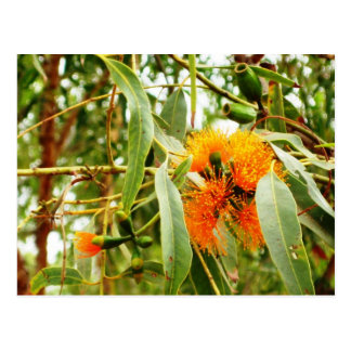 Orange Flower Postcard