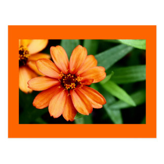 Orange flower with orange matted postcard