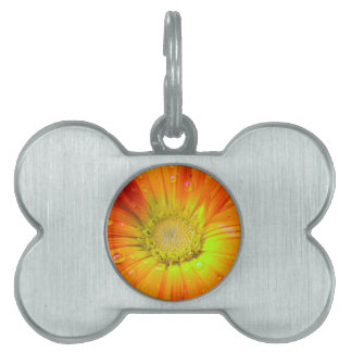Orange flower with rain drops pet name tags