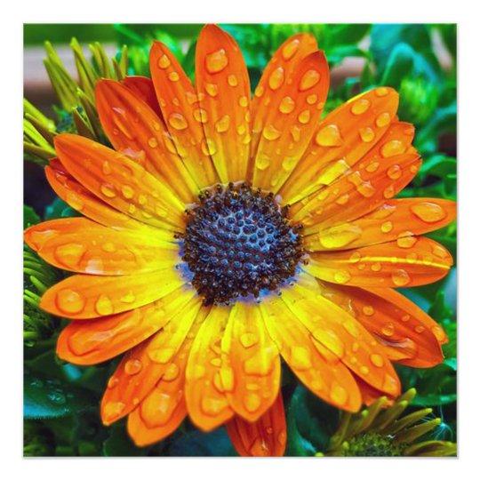 Orange Flower With Rain Drops Photo Print