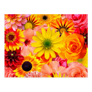 Orange flowers_ Sanchez Glory Postcard