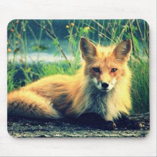 Orange fox mouse pad