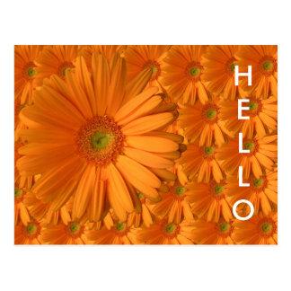Orange Gerber Daisy Postcard
