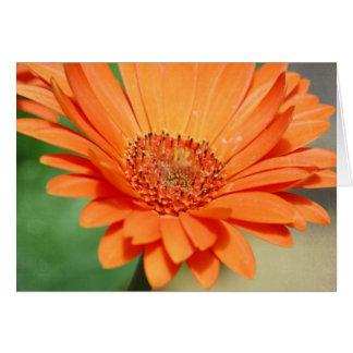Orange Gerbera Daisy Card