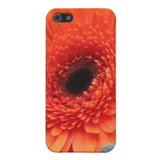 Orange Gerbera Daisy Case For iPhone 5/5S
