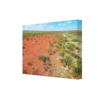 Orange grass in the steppe. canvas print