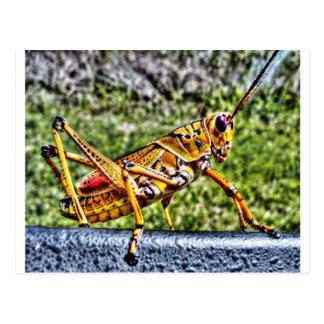 Orange Grasshopper Postcard